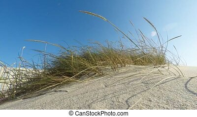 Sand dunes formation during a windy afternoon on the beach.
