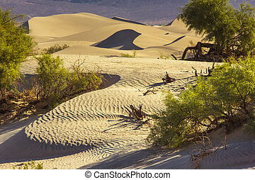 Sand Dunes in the Morning