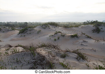 Sand dunes landscape. Anapa, Krasnodar region. Russia