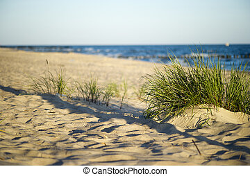 Sand dunes near to the sea with grass
