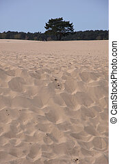 Sand dunes on edge of forest