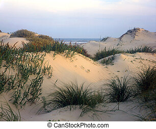 South Padre Island - Sand dunes on South Padre Island ...