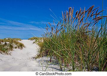 Sand dunes with beach grass