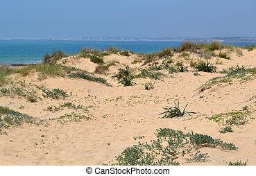 Sand dunes with beach