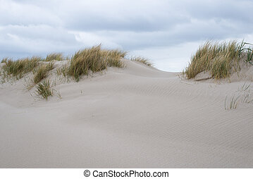 Sand dunes with beachgrass at the island of Sylt in Germany