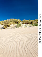 Sand dunes with beachgrass in The Netherlands