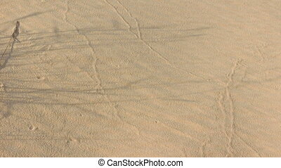 Sand dunes with dried grass - Sand dunes with dried herbs...