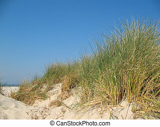 Sand dunes with dune grass under a blue sky.