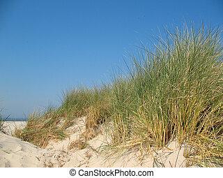 Sand dunes with dune grass under a blue sky.