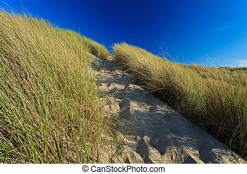 Sand dunes with helmet grass