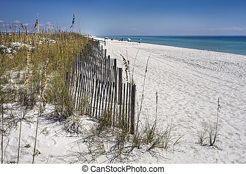 Sand Fences Protect Dunes at the Beach