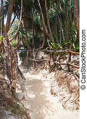 Sand footpath on the island