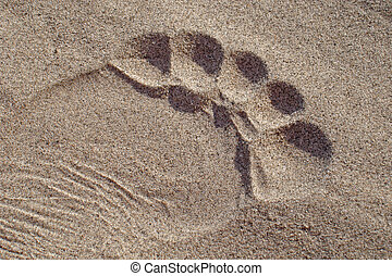 Sand Footprint Toes