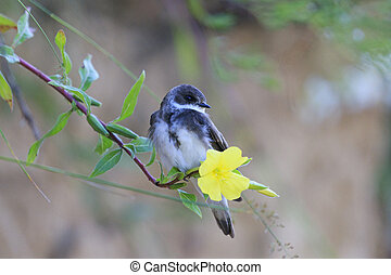 sand martin sits on a flower