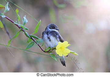 sand martin sits on a flower with sunny hotspot