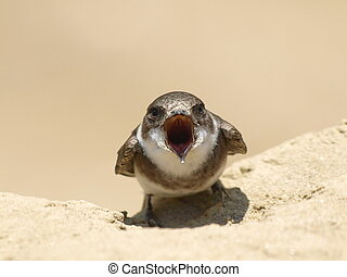 Sand Martin, swallow, riparia