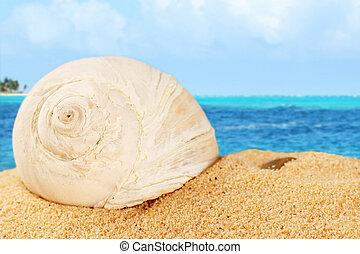 sand, schale, karibisch, od