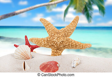 sand see, seestern, schalen