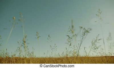 sand spring steppe. nature slow motion video landscape sand...