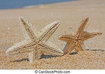 Sand Stars Sea taken in Bekal, Kerala, India