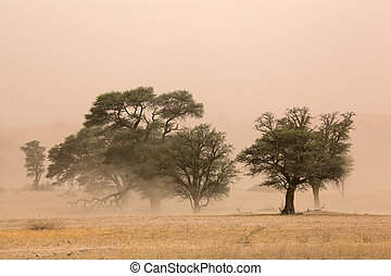 Sand storm - Severe sand storm in the Kalahari desert, South...