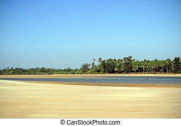 sand strand, hos, håndflade træ