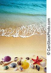 sand strand, sjögång skal