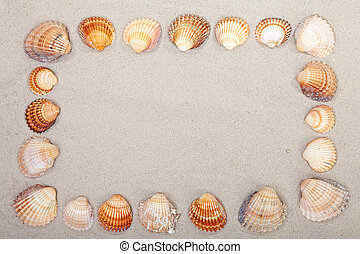 sand with frame of shells