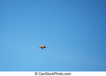 sandpiper bird in flight