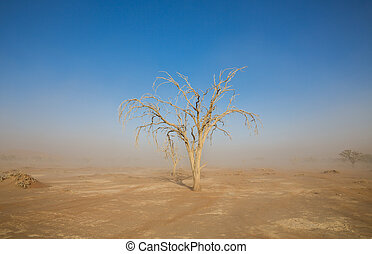 Sandstorm and acacia tree in Deadvlei, Namibia