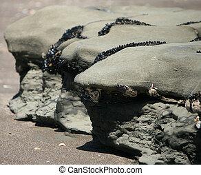 sandstrand, 1, steinen