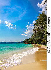 sandstrand, handfläche, sea., tropische , schöne
