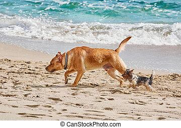 sandstrand, hunden