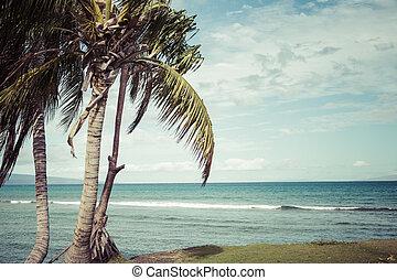 sandstrand, kaanapali, touristischer bestimmungsort, hawaii, maui