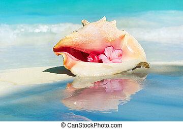 sandstrand, karibisch, schale, sand., tritonshorn