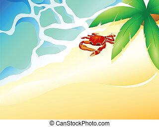 sandstrand, krabbe