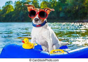 sandstrand, sommer, hund