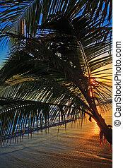 sandstrand, sonnenaufgang, lanikai, hawaii, pazifik