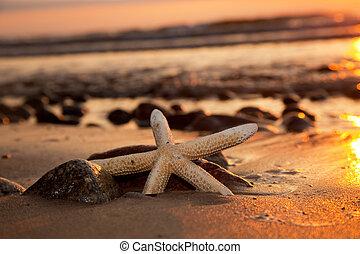 sandstrand, sonnenuntergang, seestern