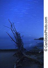 sandstrand, stern verfolgt