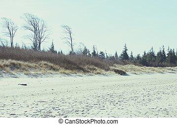 sandstrand, von, darss, halbinsel, (mecklenburg-vorpommern)
