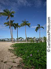 sandstrand, waikiki, hawaii, honolulu