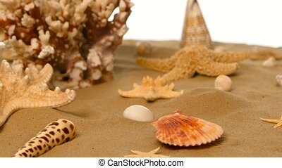 Sandy background with shells and starfish, white, rotation