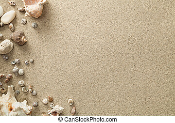 Sandy Beach Background with Shells