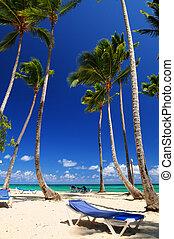 Sandy beach on Caribbean resort with tall palm trees