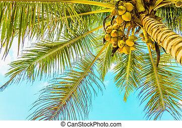 Sandy beach with coconut palm - Amazing sandy beach with ...