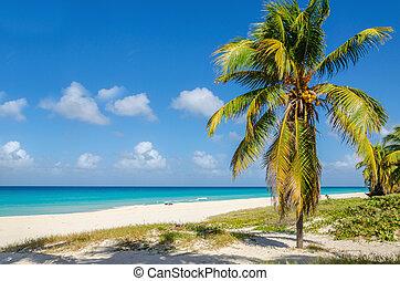 Sandy beach with coconut palm tree, Caribbean - Amazing ...