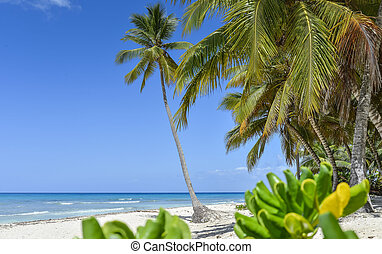 Sandy beach with coconut palm trees