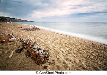 Sandy beach with old trunk on the Black Sea in Sinemorets, Bulgaria