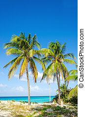 Sandy beach with palm trees, Caribbean Islands